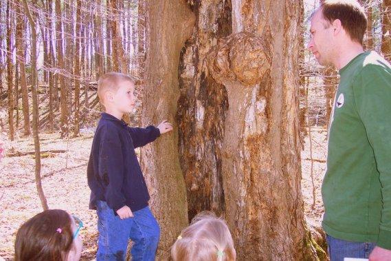 Tree Lesson